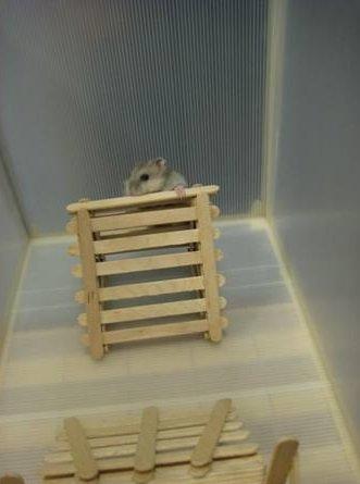 Как сделать лестницу хомяку